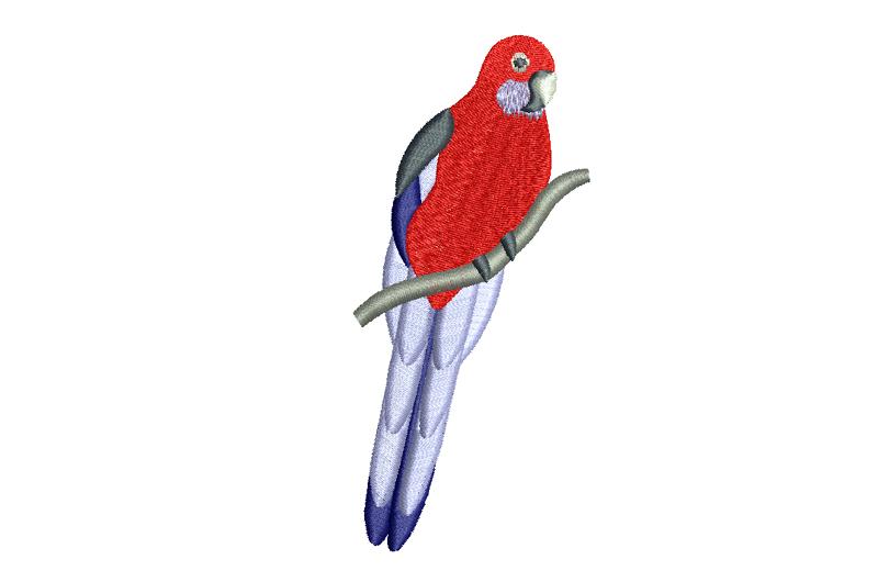 Free_Designs_Images_800x5302_Crimson_Rosella_2