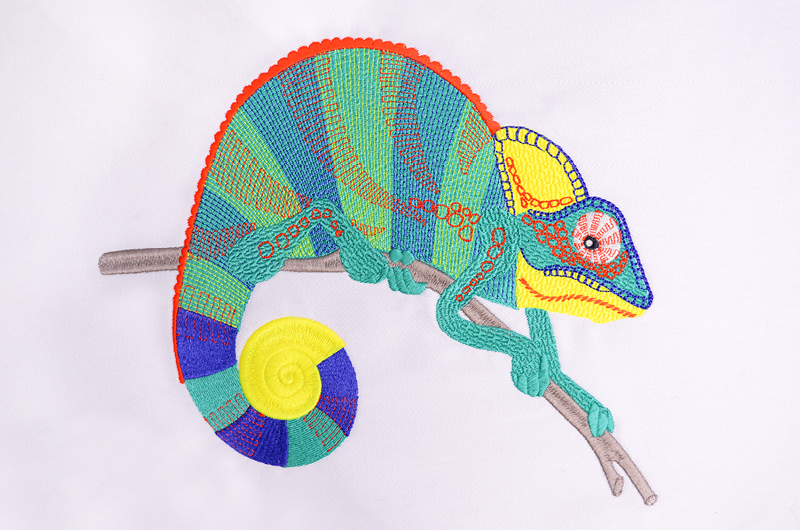 Free_Designs_Images_800x530_Chameleon_1