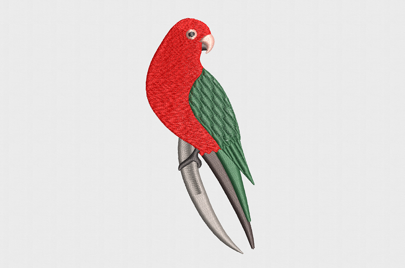 Free_Designs_Images_800x530_King Parrot_2